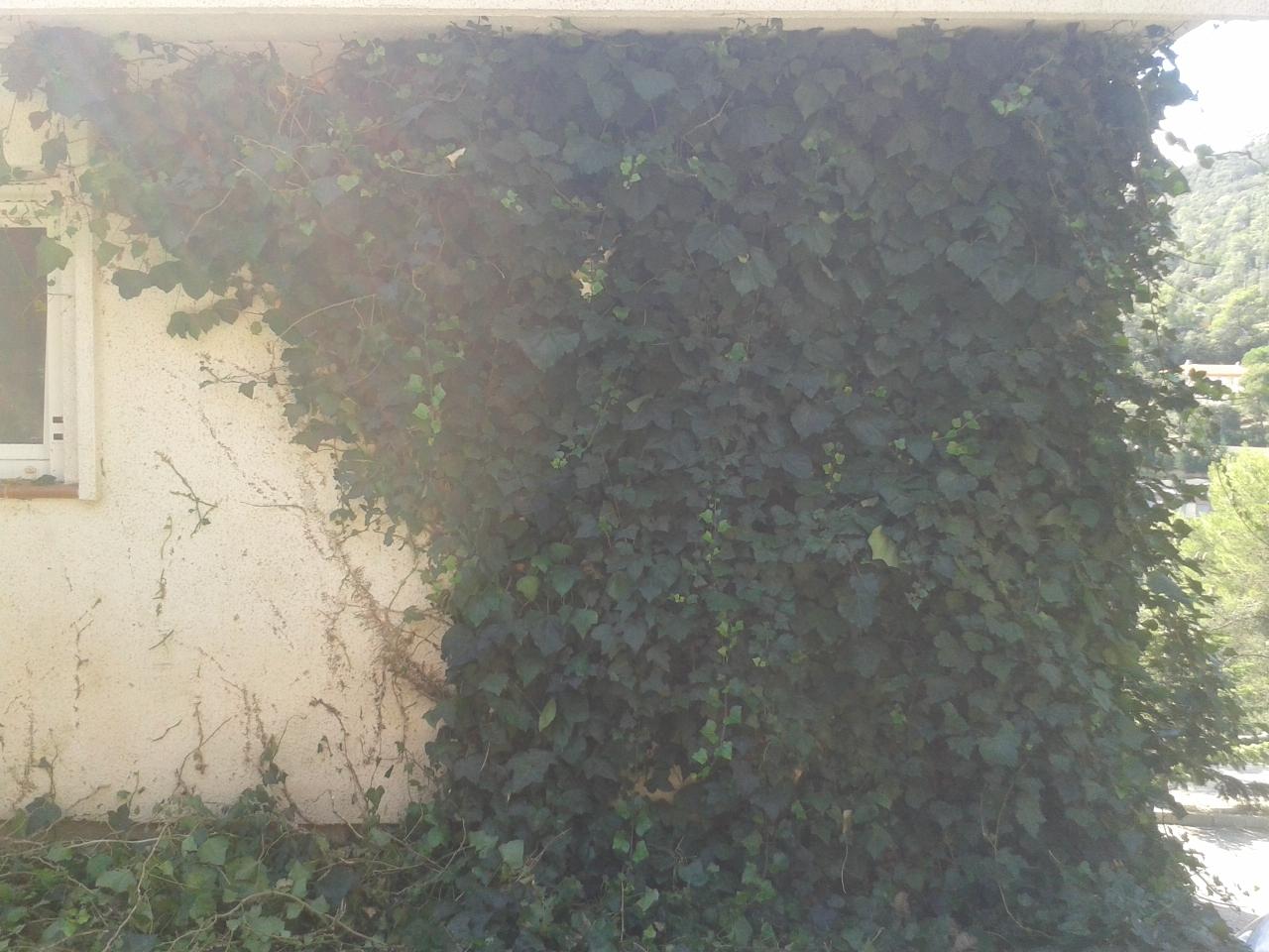Serviciosdejardineriabasica jardineria barata 90 quitar for Jardineria barata barcelona