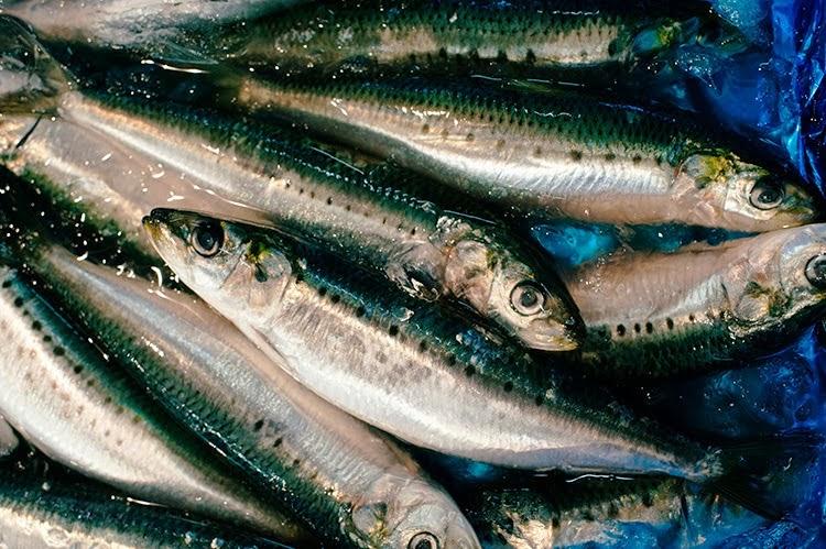 Tsukiji Fish Market_what to do in Tokyo Japan