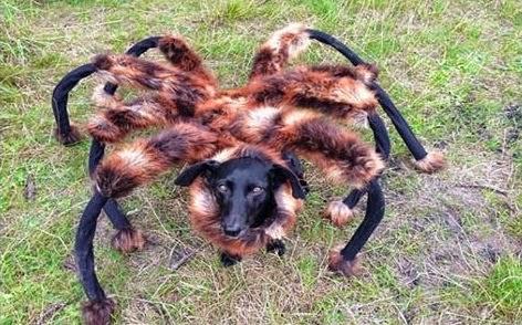 ما هي قصة «الكلب العنكبوت» التي انتشرت صوره مؤخرا