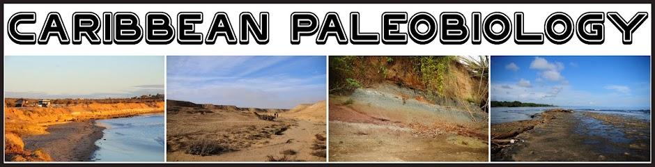 Caribbean Paleobiology