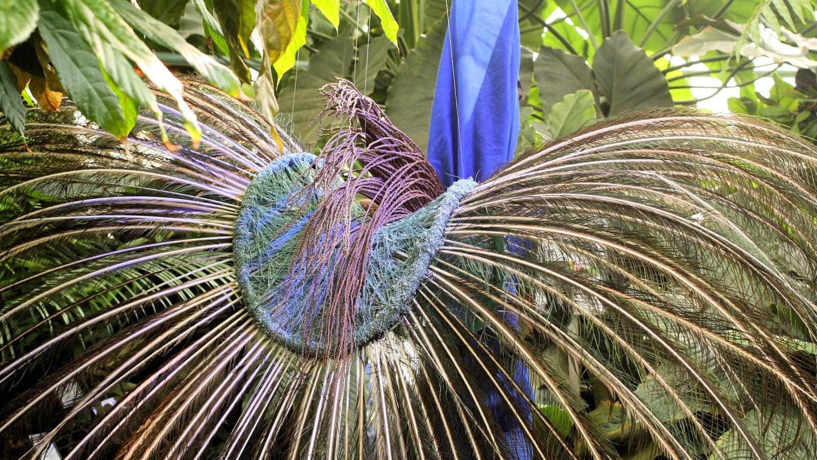 Botanische Tuin Kerkrade : Brugensis in de botanische tuin gent