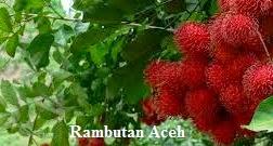 manfaat buah rambutan bagi kesehatan