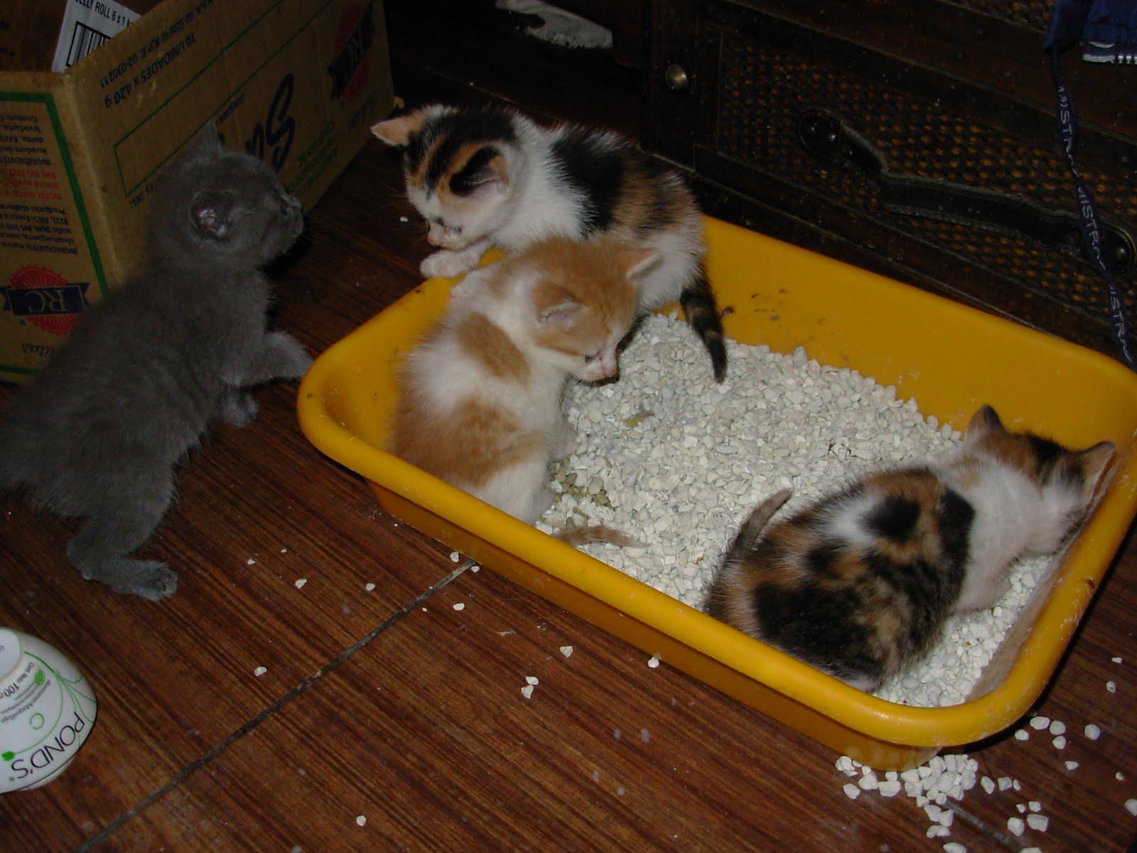 Gatos en adopción (Buenos Aires, Argentina) adopciondegatos@gmail ...