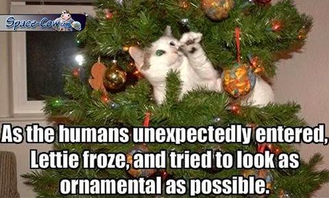 funny cute ornamental cat