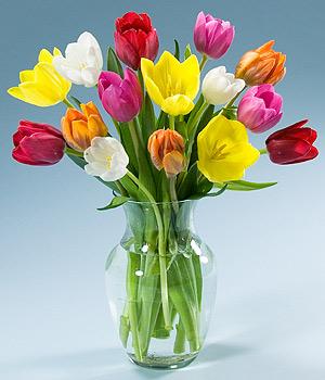http://4.bp.blogspot.com/-RBBqY72wP8A/TVNGmCGsiJI/AAAAAAAAAGY/Sa8U4bKjxGc/s1600/tulips.jpg