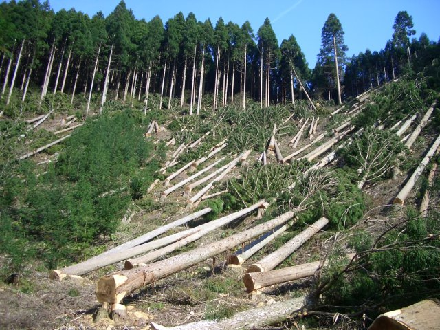 globalization of deforestation Deforestation, clearance, or  globalization is often viewed as another root cause of deforestation, though there are cases in which the impacts of globalization.