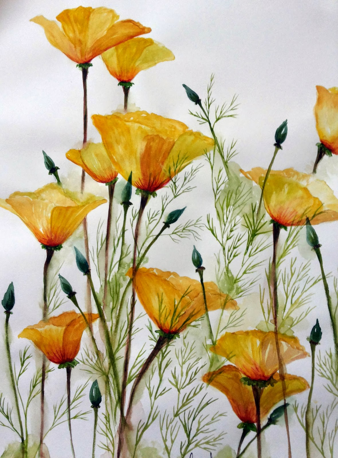 #yellow #poppy #flowers #shoots #painting #watercolor #blooming #garden