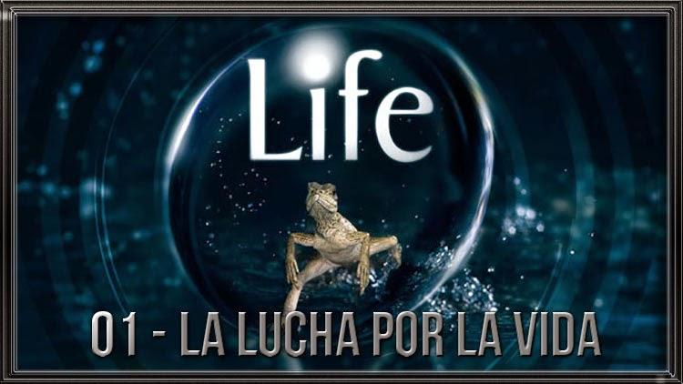 """Life 01/10 """"La Lucha por la Vida"""" 720 Latino/Ingl"""