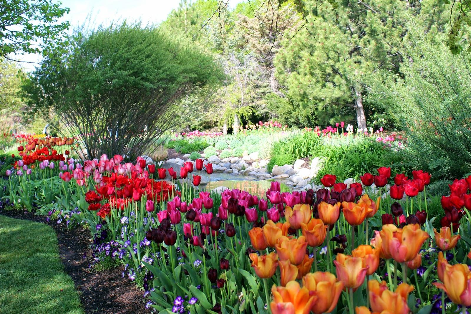The Lehman Ites Tulip Festival