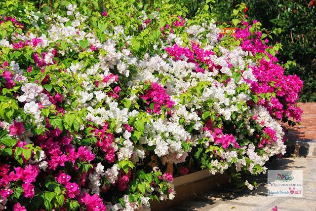 Le jardin de fleurs d'un resort à Phan Thiet