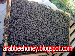 دراسة جدوى وافية لمشروع إنشاء منحل عسل Arabbeehoney.blogspot.com+(8)