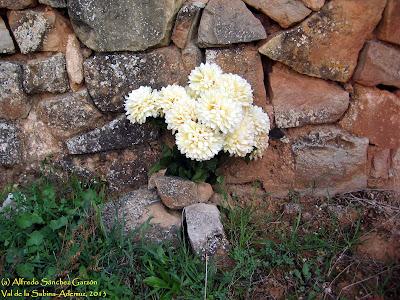 cementerio-val-sabina-ademuz-enterramiento