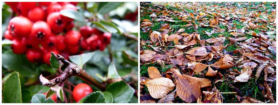 Herbstfotos Vogelbeeren