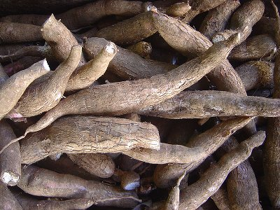 cassava root, cassava, yucca root, yucca recipes