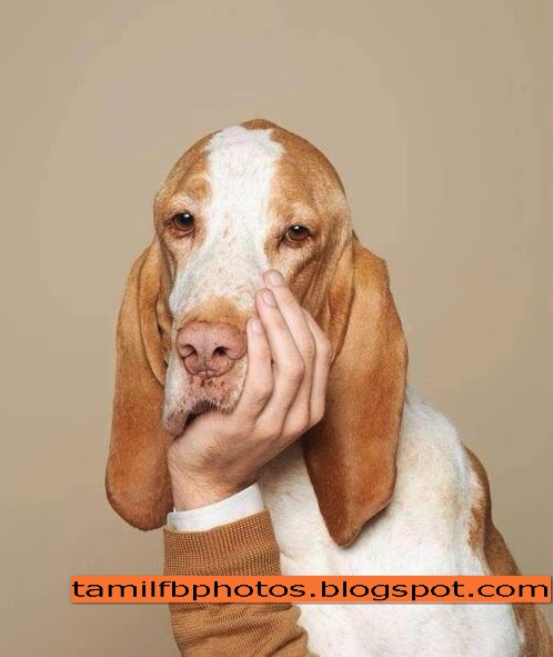Funny Photos : Dog with hand