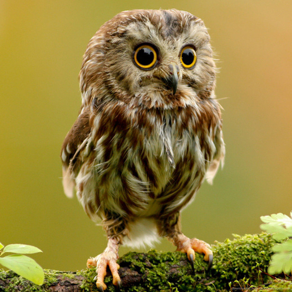 Fluffy thing fridays – for the love of owls