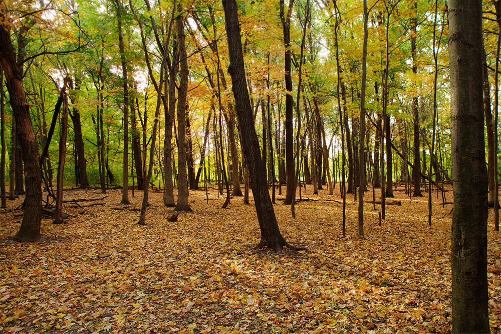 Tamarack Nature Center Trail