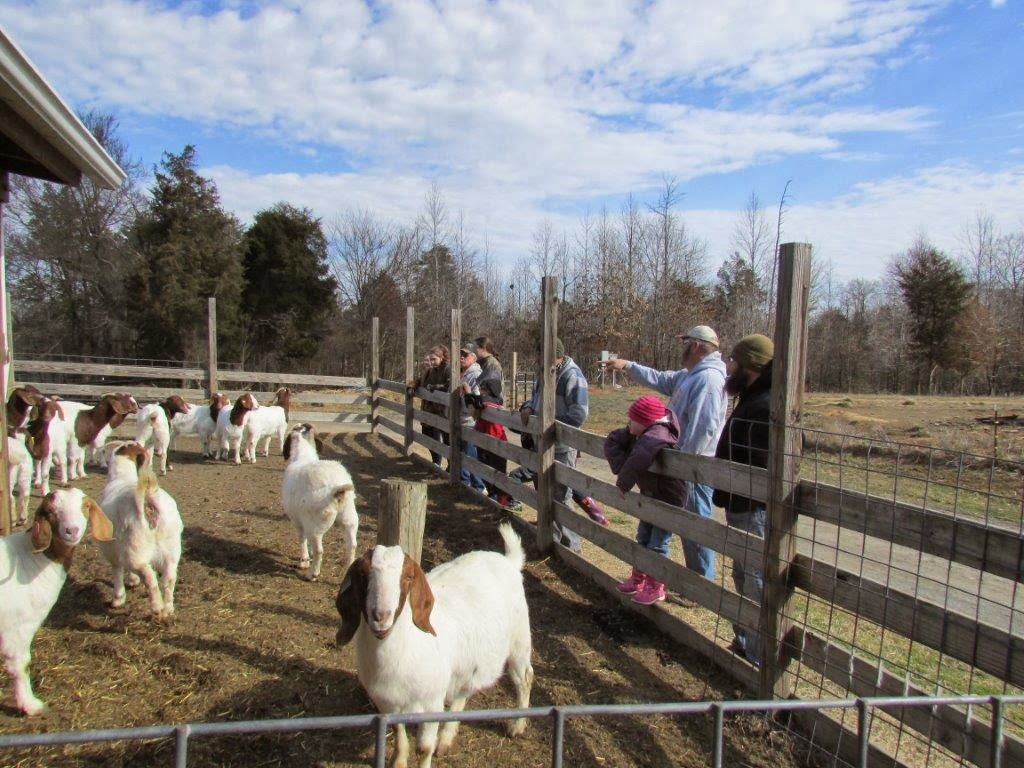 R Goats 4-H in Orange County, ...