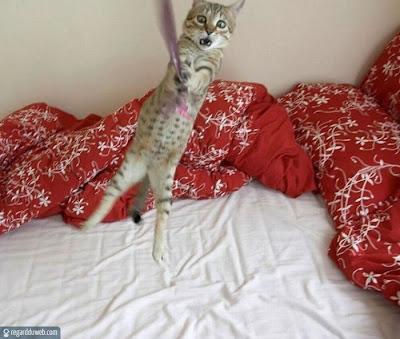 Images drôles et étonnantes Animal – Chat v80