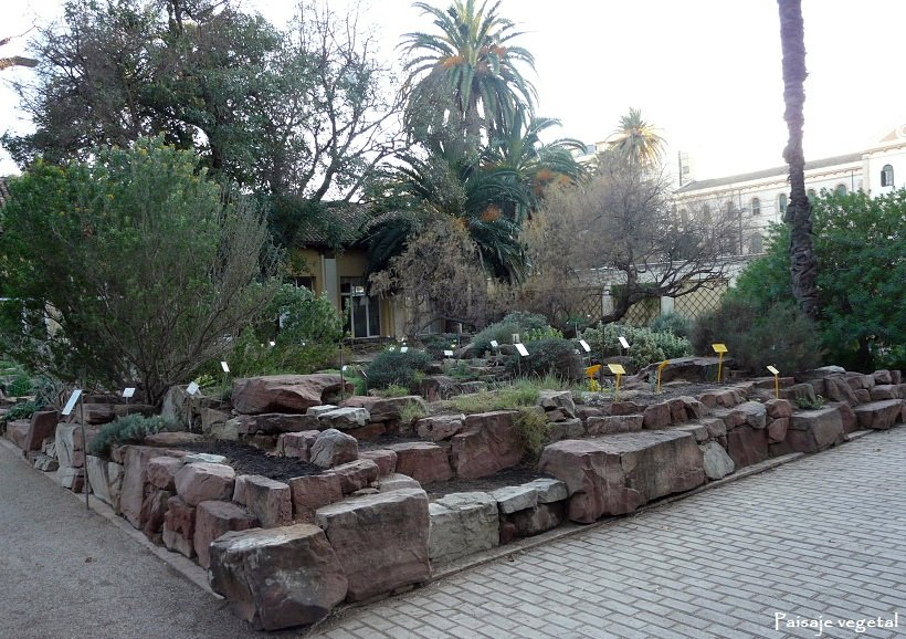 Paisaje vegetal jard n bot nico de valencia ii - Jardin botanico valencia ...