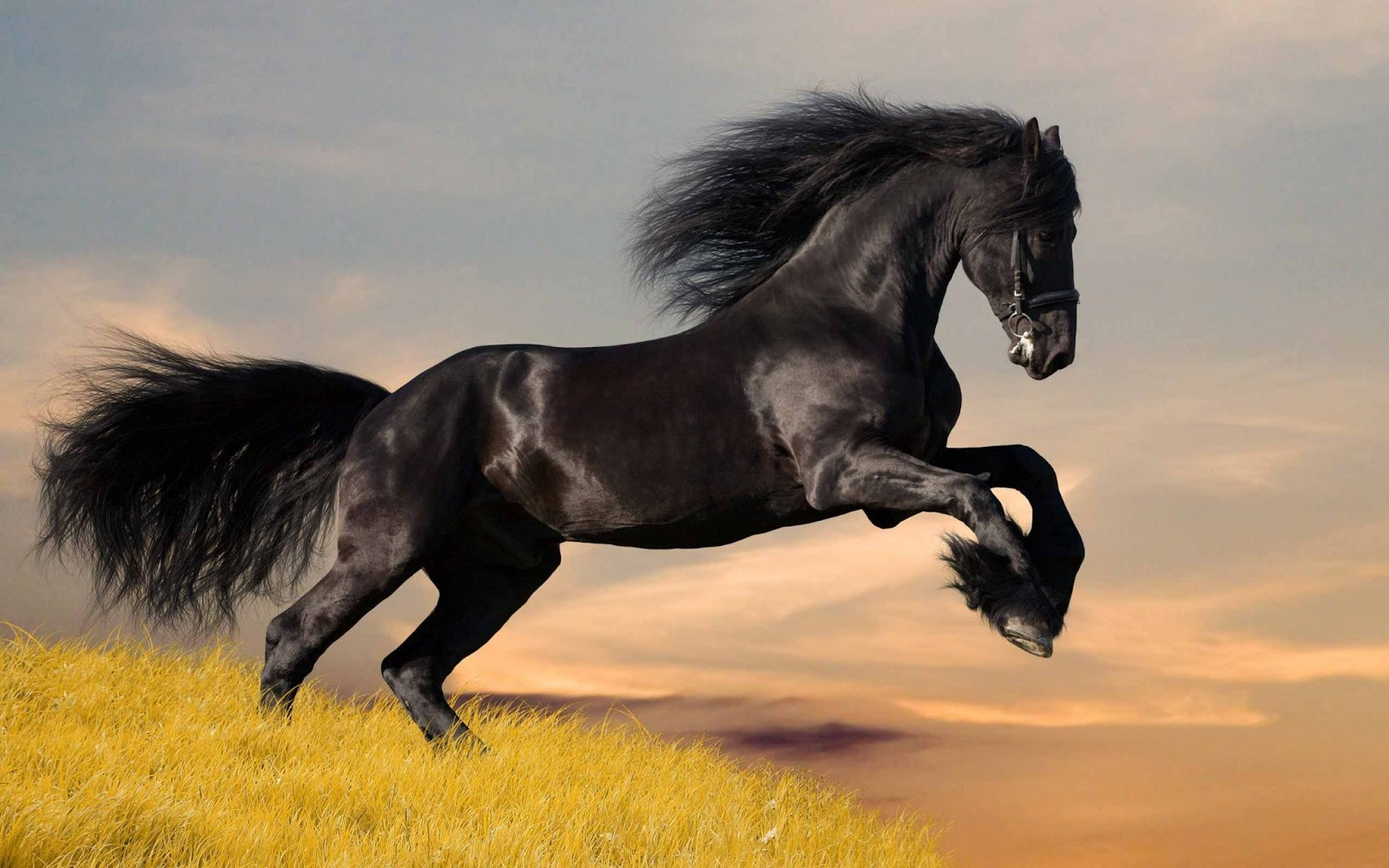 all wallpapers beautiful horse hd wallpapers 2013