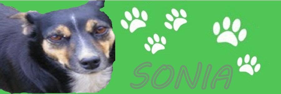 Male Psie Serce.