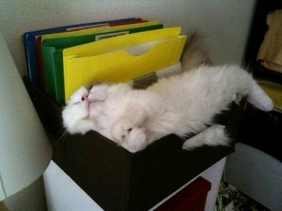 how to put a cat to sleep at home