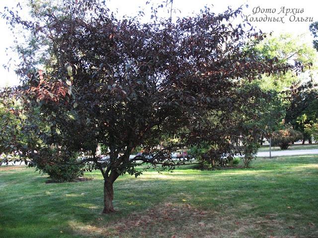 Два дерева 1