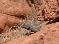 Foto-Dekathlon: tierisch tierisch