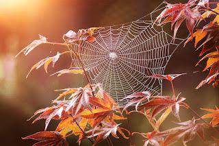детские поделки осенние паук на паутине
