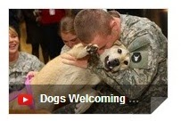 Dogs Welcome Home Soldiers, Dog Welcoming Home Soldier