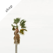 Lonely Palm Tree Print | KathrynMcCraryPhoto