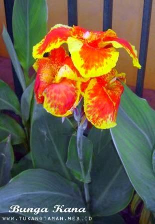 Jual Bunga Kana