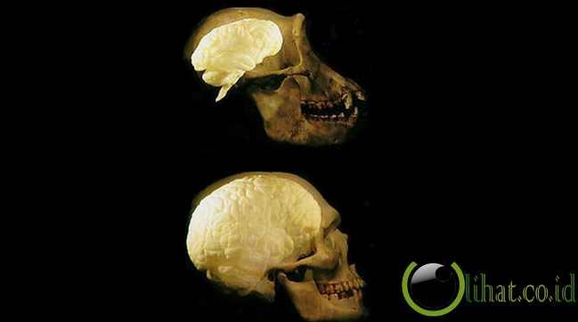 Ukuran otak