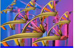 ORGANIZARE ADN