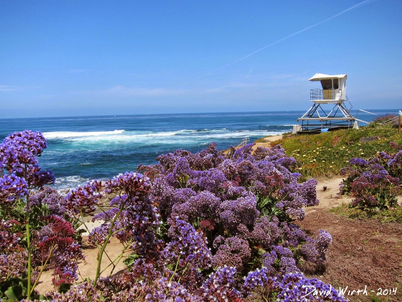 la jolla california, ocean view