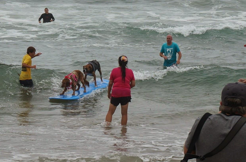 concurso de surf para perros
