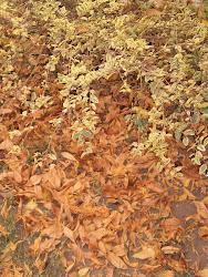Mucho otoño
