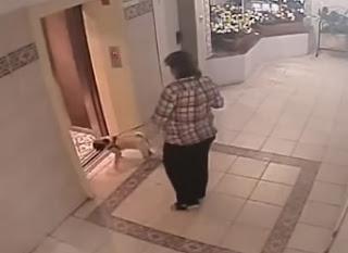 perro casi muere por elevador