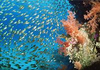 peces oceano