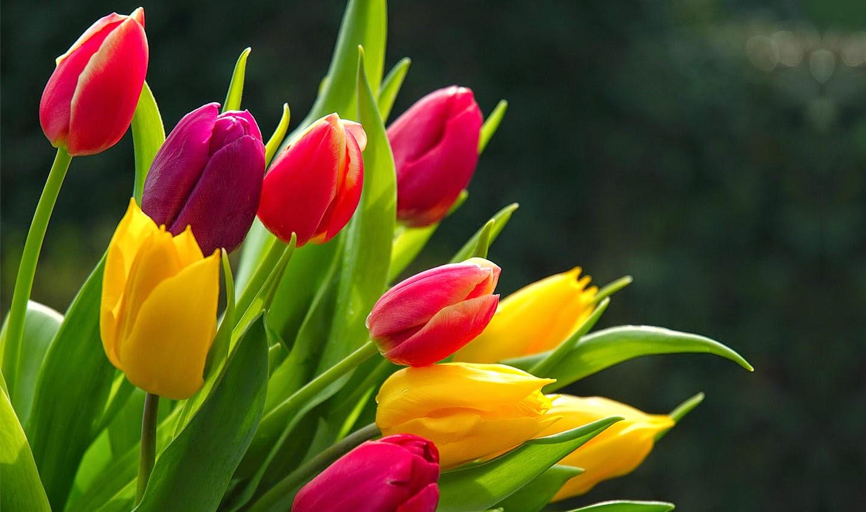 Bienvenidos al nuevo foro de apoyo a Noe #295 / 05.11.15 ~ 14.11.15 - Página 2 All+tulips+color+for+windows+7