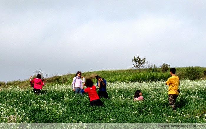 Go find wildflower fields