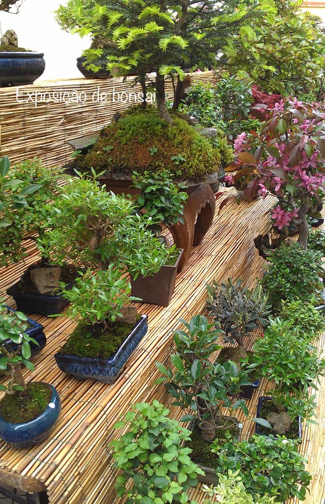 bonsai-plantas
