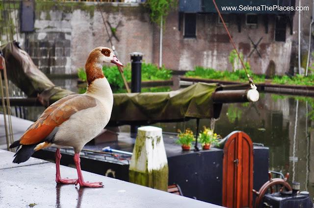 Duck Delftshaven Rotterdam