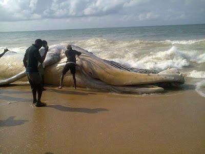 whale alpha beach lagos nigeria