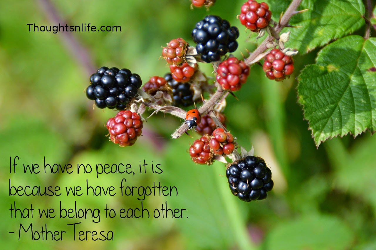 Thoughtsnlife.com: If we have no peace, it is because we have forgotten that we belong to each other. - Mother Teresa