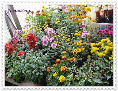 bunga-bunga di kundasang