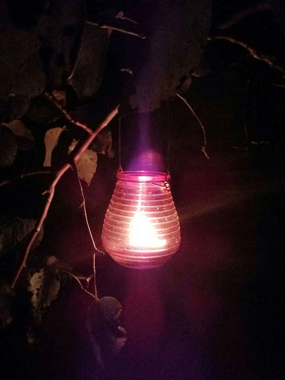 a glowing lantern in the tree
