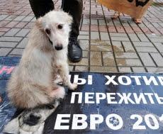 Blog de oasis54 : OASIS DE PAIX, Euro 2012 : l' Ukraine extermine les animaux errants ( suite )