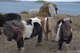 hello from Shetland